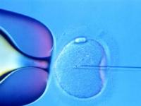 Γονιμοποίηση ωαρίων με την τεχνική της μικρογονιμοποίηση (ICSI)
